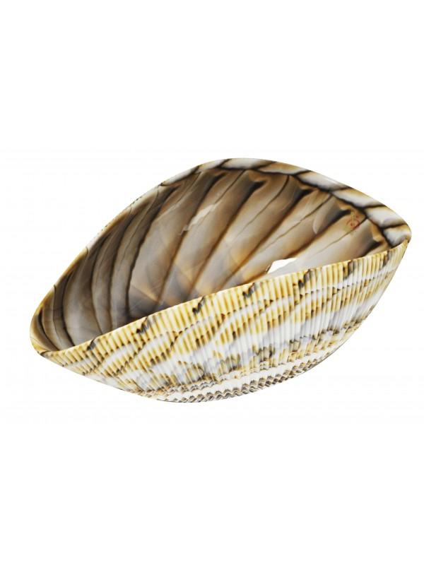 Murano Glass bowl Shell